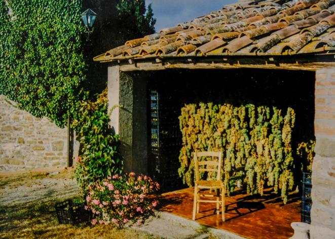 pruneto-vinsanto-uva